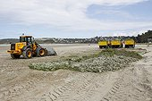 Beach of Saint-Michel-en-Greve cleaned green algae ; The algae are collected ready to be picked