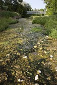 Dry river polluted and overrun by primrose-willows France