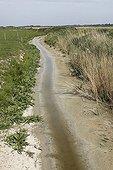 Début de sécheresse dans le marais du Hâble-d'Ault Somme