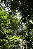 Ferns in a greenhouse of the Jardin des plantes de Paris