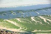 Green algae Bay of Douarnenez France