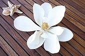 Magnolia flower laid on teak gratings