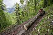 Logging in the forest of Saint-Pierre de Chartreuse France