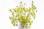 Parsnip in bloom bouquet in studio