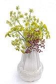 Darf elderberry and parsnip in bloom bouquet in studio