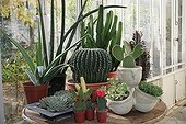 Cacti and succulents in a glasshouse