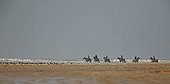 Riders on the shore and a group of eurasian Oystercatchers
