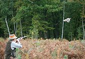 Hunter aiming a ring necked Pheasant in autumn France