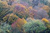 Feuillus au couleurs d'automne dans une forêt de l'Allier