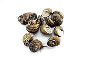 Gros gris snails waking up after artificial hibernation