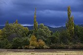 Edge of alluvial forest in autumn under a cloudy sky France