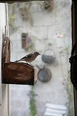Bird standing on a feeding dish in a garden