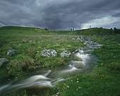 Brook in the Aubrac  France