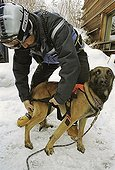 Training dogs the Alps mountain rescue
