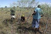 Aboriginal ladies hunting sand monitors in Australia ; Warlpiri Aborginal community of Alice Spring