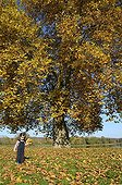 Girl collecting the leaves of a Sycamore France ; Age: 3 years
