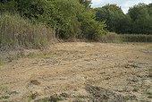 Banks of a dry pond in Bresse Jura France