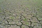 Shrinkage cracks in a dry pond in La Bresse Jura