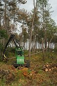 Logging of pines in the Landes France  ; After the storm Klaus in January 2009
