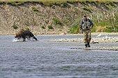 Salmon fishing in a river in Katmai NP Alaska ;