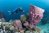 Scuba Diver and Barrel Sponge Cenderawasih Bay Indonesia