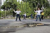 Common Water Monitor and practicing Tai Chi Lumpini Park ; Unusual, monitor lizards in the city center of Bangkok where they live happily in Lumpini Park. The authorities are concerned about the excess of lizards in the central park of Bangkok. They are becoming more numerous, about 400. The mayor of Bangkok 120 lizards captured in April to reduce the number. The lizards are a protected species, the specimens are taken to the Bureau of Wildlife north of Bangkok, then to the park Kha Kaeng Huave in the center of the country or they can live out of town