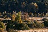 Bog of Lesslohe in autumn Bohemia