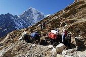 Yak caravane with Cholatse (6335), Sagarmatha National Park, Khumbu Himal, Nepal