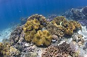 Coral reef in the underwater national park of Bunaken, Sulawesi, Indonesia.