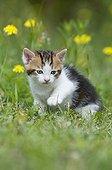 Female kitten outside in summer