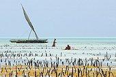 Women working in a seaweed aquaculture in Zanzibar
