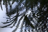 Reflections of fern in the water France
