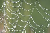 Dewdrops on a spider web in the early morningFrance