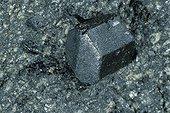 Augite originaire de Val di Fassa Tyrol Italie ; Longueur : 10 cm. Collection : Ecole des mines.