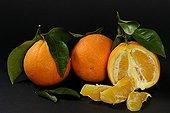 Oranges on black background