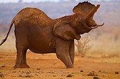 Eléphant d'Afrique prenant un bain de poussière Tsavo Est