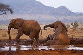 Eléphants d'Afrique prenant un bain de boue Tsavo Est Kenya