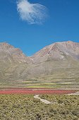 Field of organic and fair trade quinoa in Bolivia