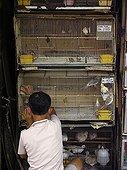 Bird dealer, Chinatown, Kuala Lumpur, Malaysia, Asien