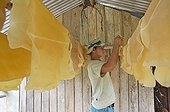 Rubber from the Chico Mendes Extractive ReserveBrazil ; Seringueiros: Rubber tappers of wild
