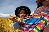 Quinoa with child in a field in Bolivia
