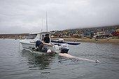 Hunter boat pulling a Narwhal Qaanaaq Greenland