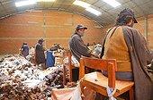 Alpacas wool in the workshops of Coproca Bolivia