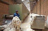 Alpacas in crude workshops Coproca Bolivia