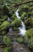 Small stream running through moss pads in the temperate rainforest, Mount Rainier National Park, Washington state