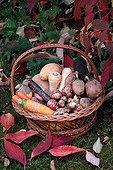 Harvest of vegetables in a garden in autumn