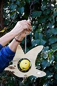 Installation of a wooden bird feeder with apple in a garden