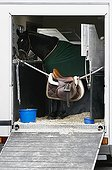 View into an open horse transporter with a horse and a horse saddle hanging on a rope