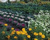 Flowered kitchen garden in autumn