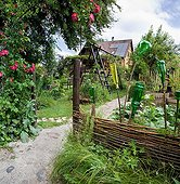 Rose-tree in bloom an garden path